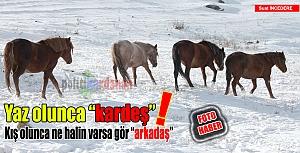 Atların zorlu kış yaşamı