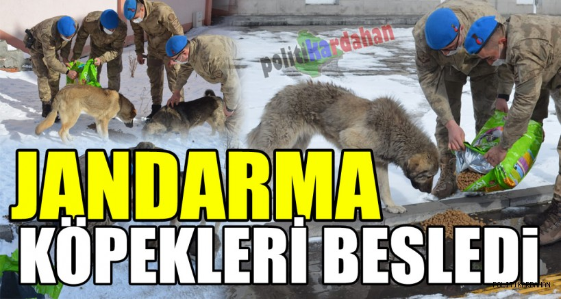 Jandarma Göle'de sokak köpeklerini besledi