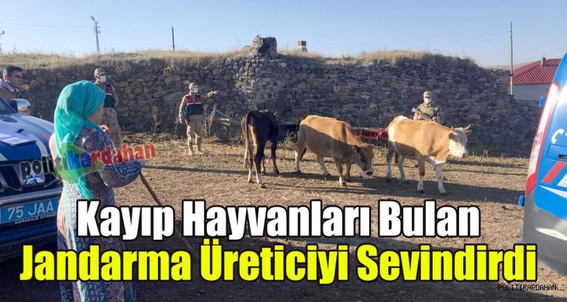 Kayıp hayvanları bulan Jandarma üreticiyi sevindirdi